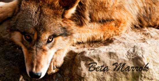 The Past is Simply That, Past (Marrok) Mammalia-Canidae-Gray-Wolf-485x728_zpsfaea199d