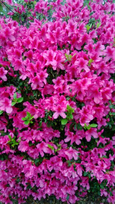 சேனையை அலங்கரிக்கும் பூக்கள் 02 Flowers_zpsfdaa8976