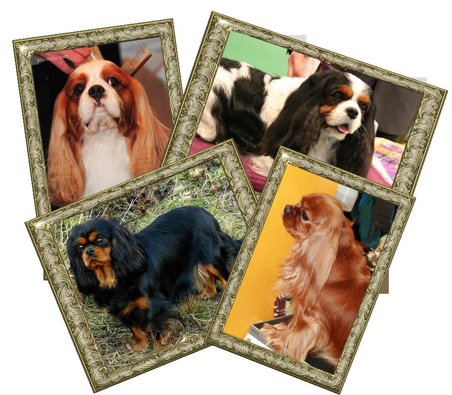 i 4 colori del cavalier king photo i4colori_zps465011b7.png
