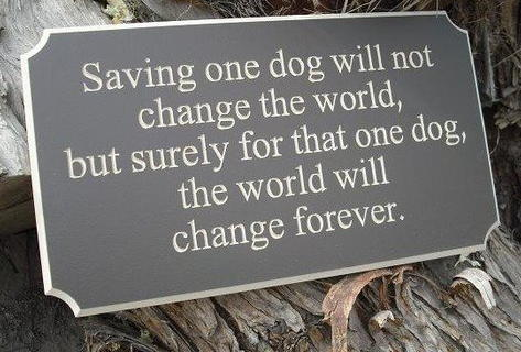 Some Photos on 'Thoughts' about adoption Savingonedogwillchangeitsworld_zps3fab8f3a