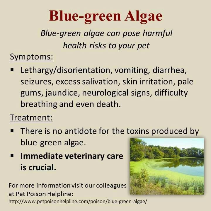 Health Warning - Blue-Green Algae BlueGreenAlgaenotice_zpsa9458cf1