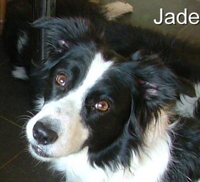Jade - Adopted via Shirley (BCNH) March 2012  2009Jade_zps2db75888