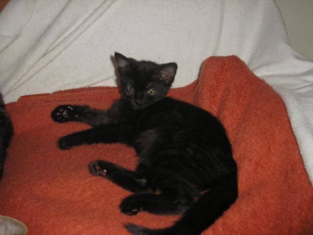Χαρίζονται γατάκια  P1010052_zps5725bcfe