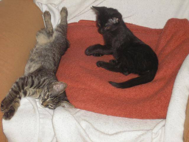 Χαρίζονται γατάκια  P1010053_zps2e3f94ed