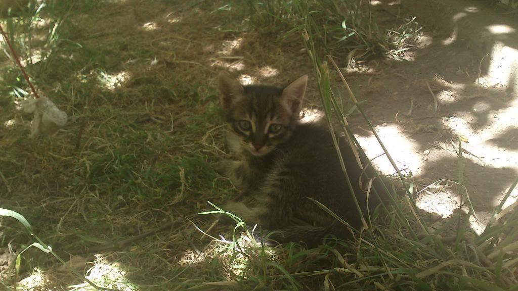 Γατακι ψαχνει για σπιτι! DSC_0073_zps21573484