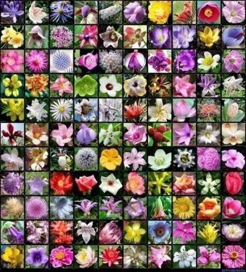Tajanstvenim stazama duse... - Page 22 Flowers