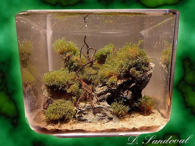 Les Miniaquariums De Barqueros Untitled-7