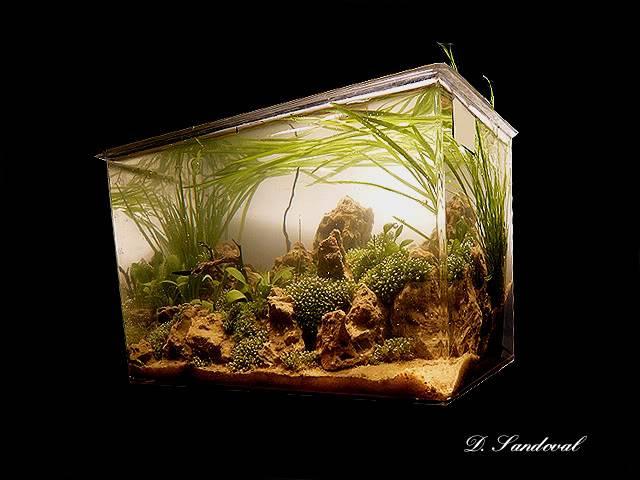 Les Miniaquariums De Barqueros Untitled-9