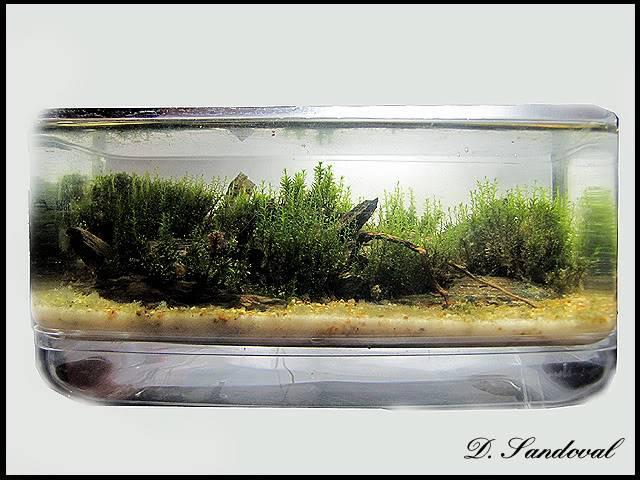 Les Miniaquariums De Barqueros Untitled-1
