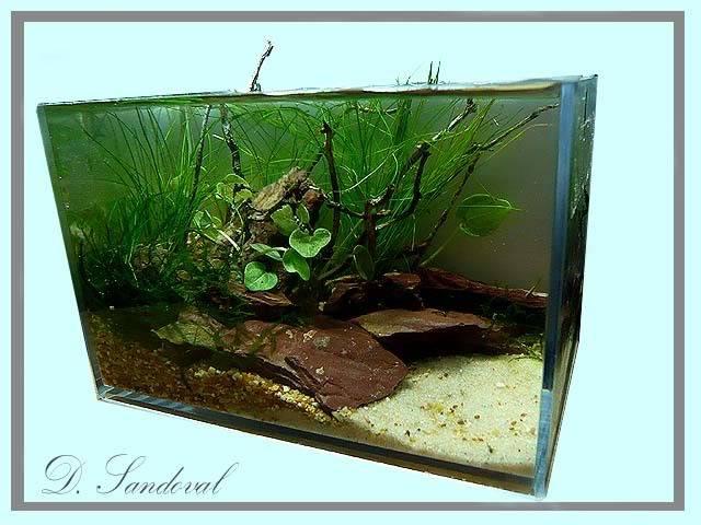 Les Miniaquariums De Barqueros Untitled-5