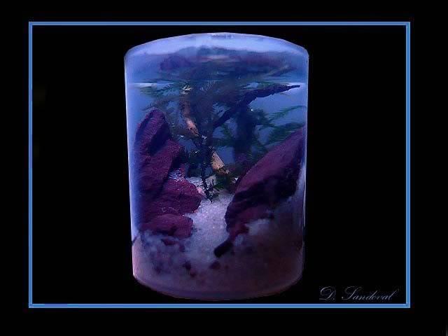 Les Miniaquariums De Barqueros Bueno