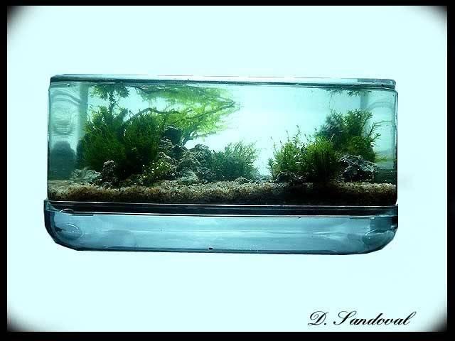 Les Miniaquariums De Barqueros Untitled-1-1