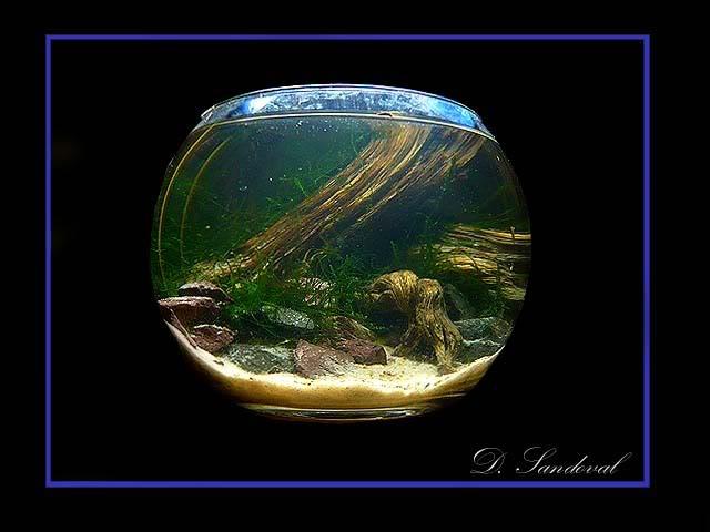 Les Miniaquariums De Barqueros Untitled-3