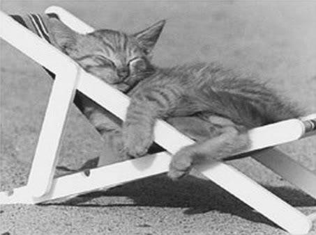 صور لمحبي القطط000 0037
