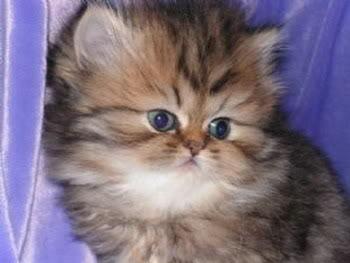 صور لمحبي القطط000 05287190706797_2