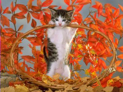 صور لمحبي القطط000 0f4e0c9926