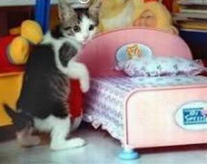صور لمحبي القطط000 10