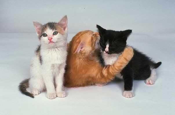 صور لمحبي القطط000 1127055L