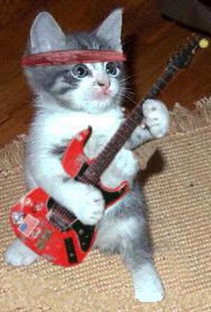صور لمحبي القطط000 22