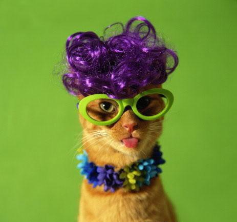 صور لمحبي القطط000 55