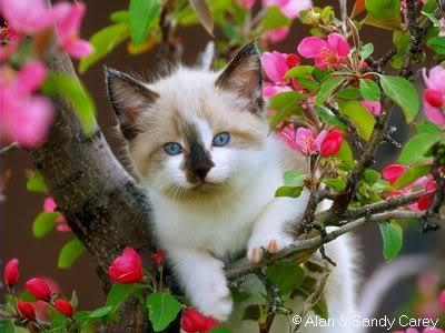 صور لمحبي القطط000 80bf1a1e53