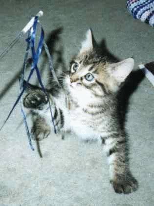 صور لمحبي القطط000 G00412