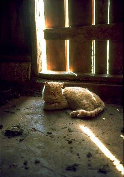 صور لمحبي القطط000 Kitty