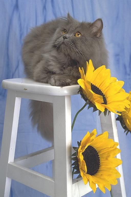 صور لمحبي القطط000 UL00045