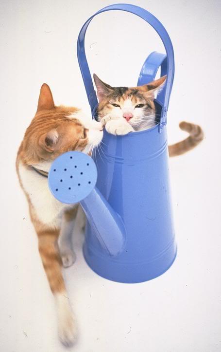 صور لمحبي القطط000 UL00046