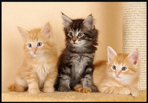 صور لمحبي القطط000 Aa11vd5