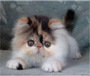صور لمحبي القطط000 Blootr11