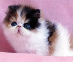 ملف عن تربية القطط  وبعض الحيوانات الاخرى  Devienna