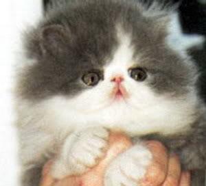 صور لمحبي القطط000 Drbdmg