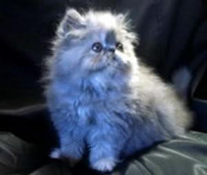 صور لمحبي القطط000 Fdukk