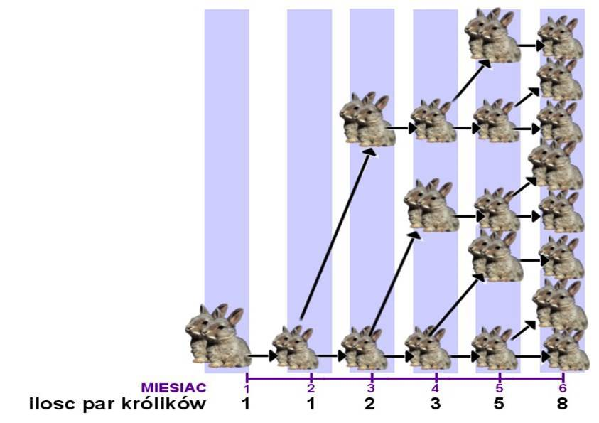 Naukowe dowody na Bożą ingerencję w stwarzanie Kroliki_1_zpss61yqlp8