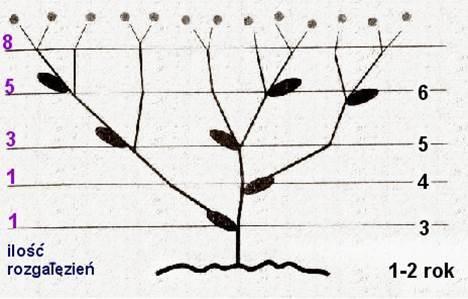 Naukowe dowody na Bożą ingerencję w stwarzanie Rys9_zpsflnn3vkr