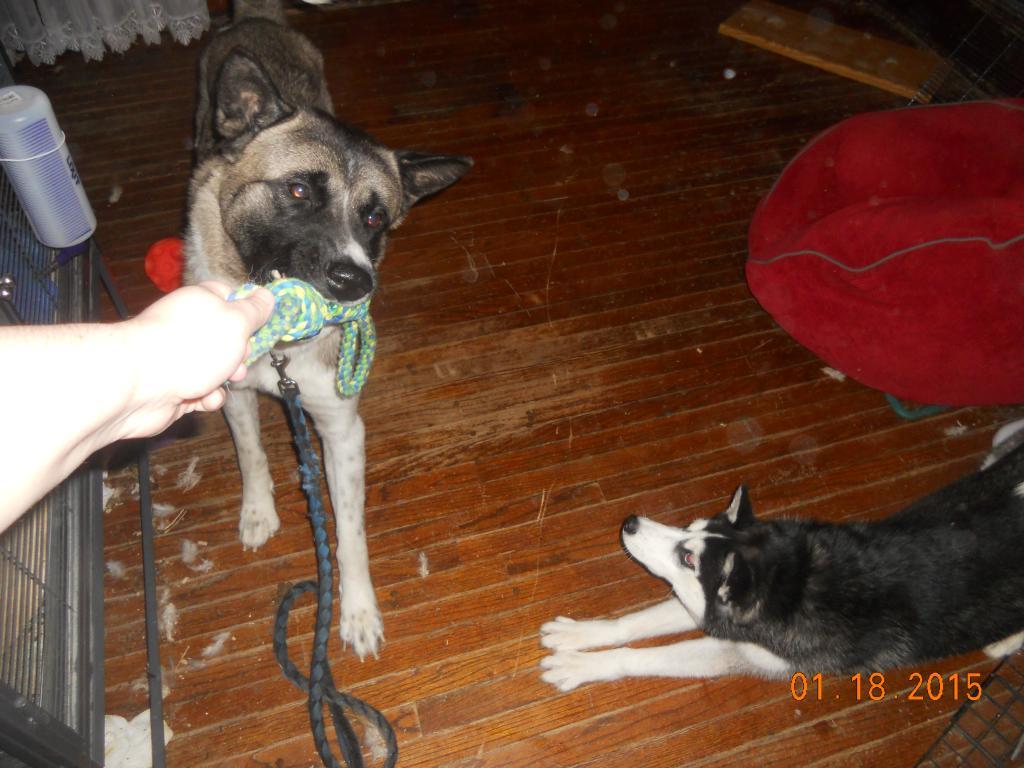 newer husky owner - pictures DSCN2356_zpsaf60d1b5