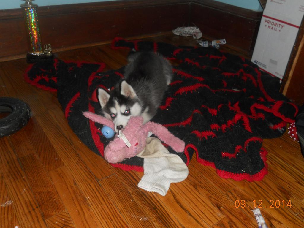 newer husky owner - pictures DSCN2083_zpsed96334e