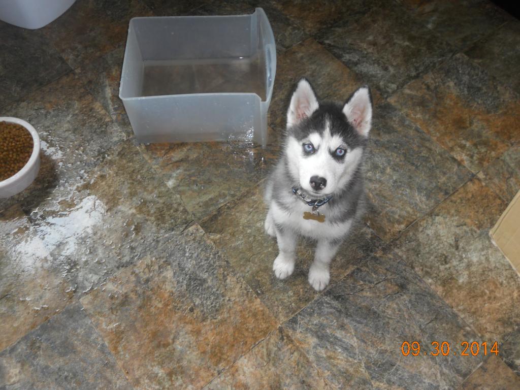 newer husky owner - pictures DSCN2140_zpsd8e84b80