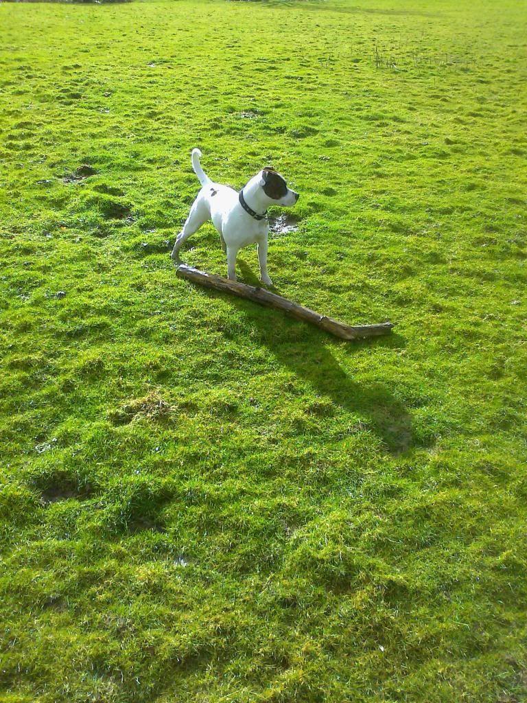 Throw it mum Photo03601_zps6f31e149