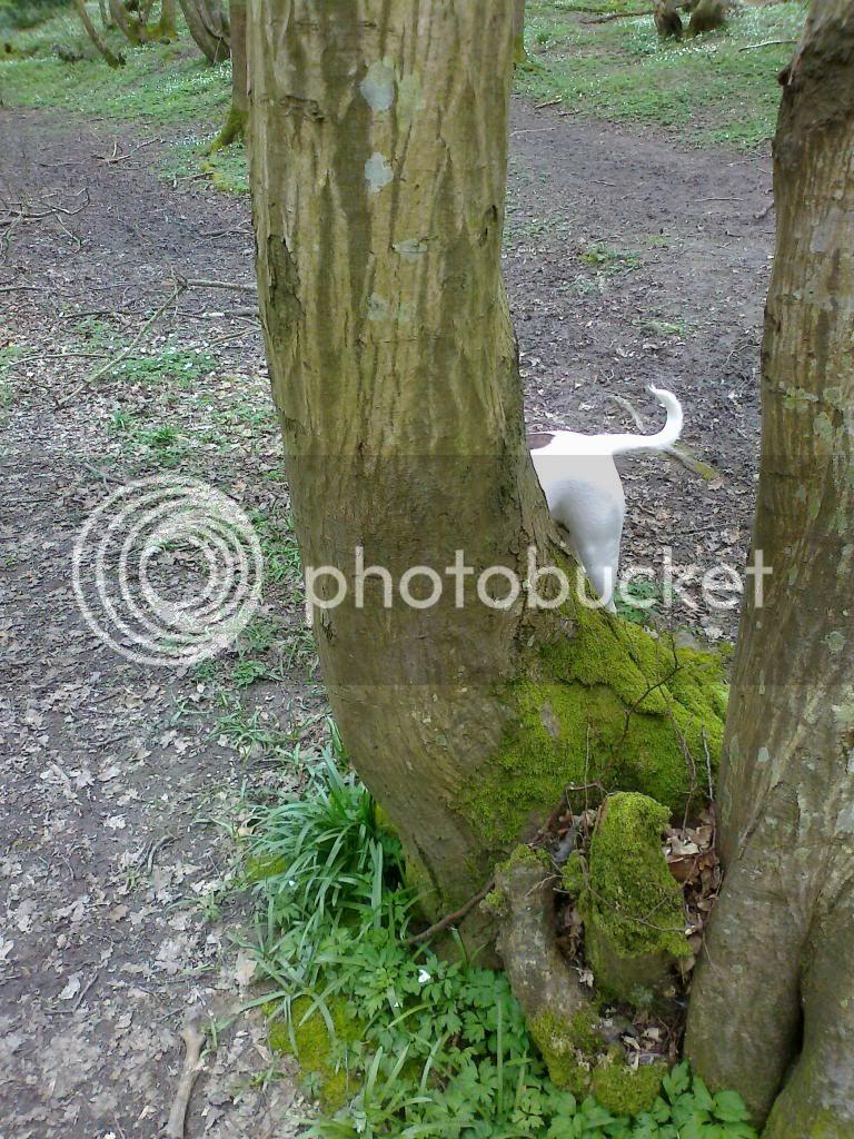 Where's Katy ? Photo04001_zps0b5d54e2