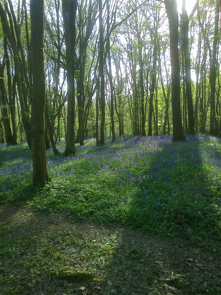 Bluebell time Photo04191_zps2c4e2829