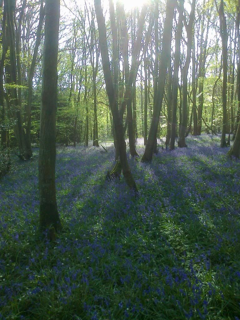 Bluebell time Photo04241_zps24c22631