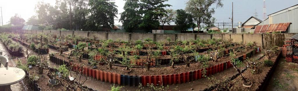 My garden, where relax the weekend 13308538_832333620234339_1032492709114603813_o_zpsrhavbyvt