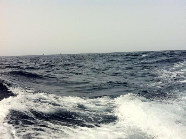 Открытый океан. F00563d6a34dd8553405e0af8368f224_zps73658c3c