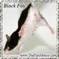 Mouse Genetics Blackfox_zps3zb6ir5t
