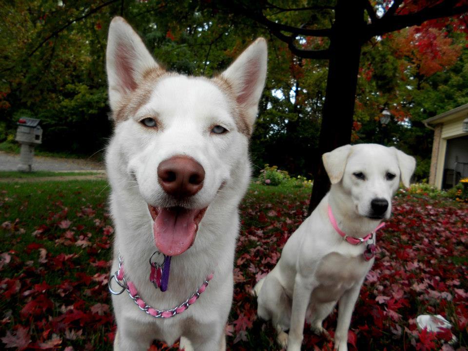 Zizzy and Yuki scrapbook! *updated 12-17* 545312_498434376842893_272995483_n
