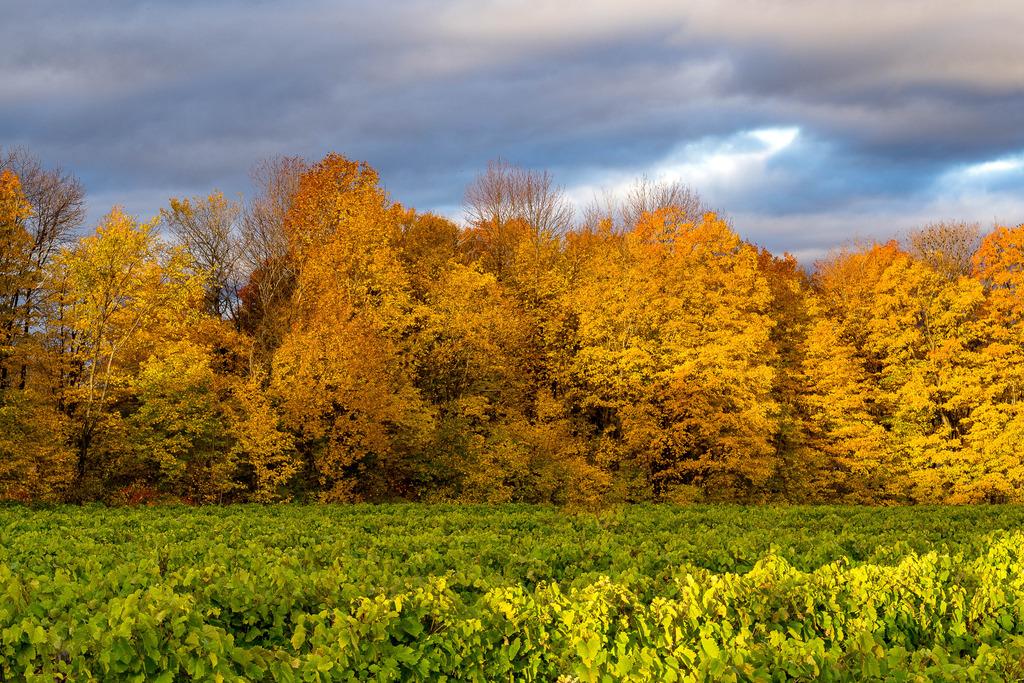 Paysage d'automne à l'Île d'Orléans Mitan%2063_zpsjaylqa2w