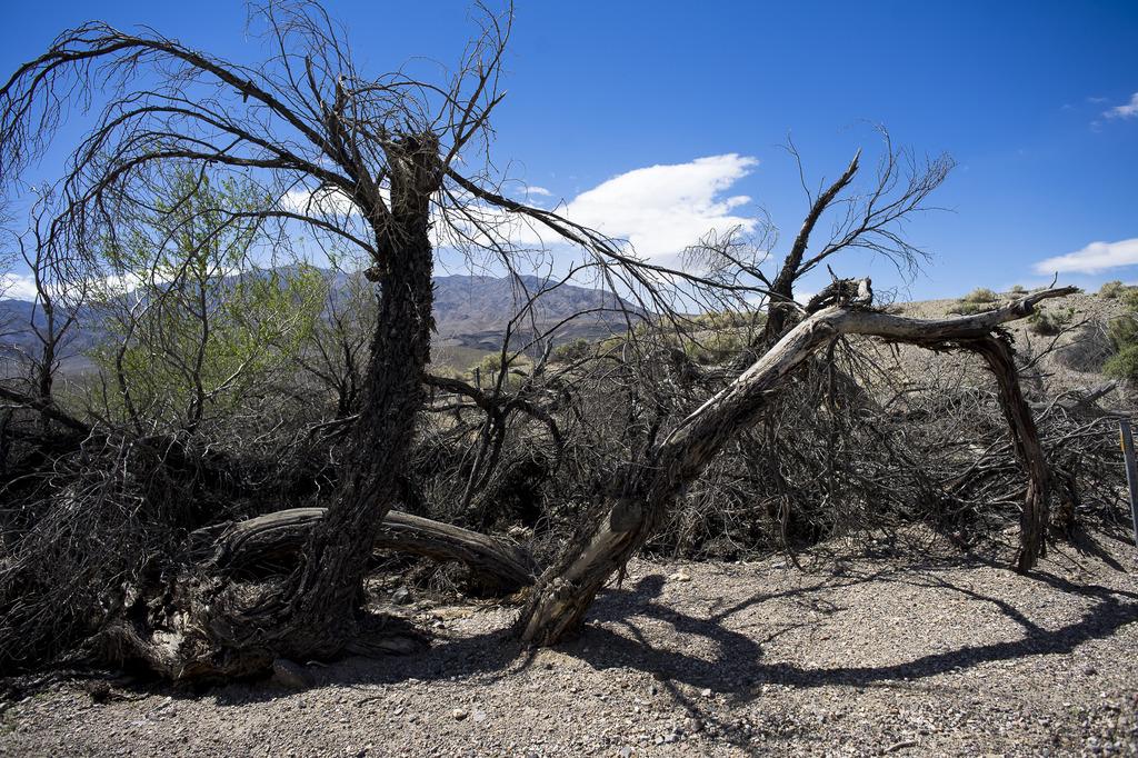 Death Valley (partie 2) DV2017-15_zpsvdkifmsb