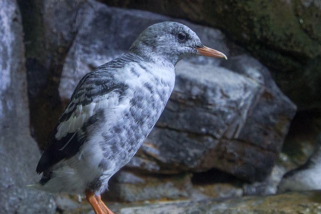 Oiseau inconnu... Oiseaux%201_zpshmm6k4qg